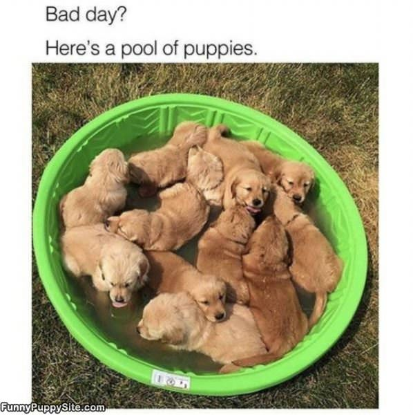 A Pool Of Puppies