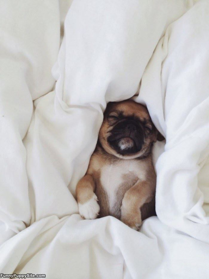 All Tucked Into Bed