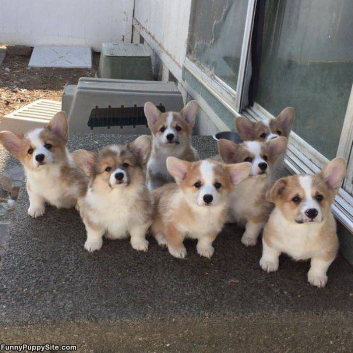 An Army Of Cuteness