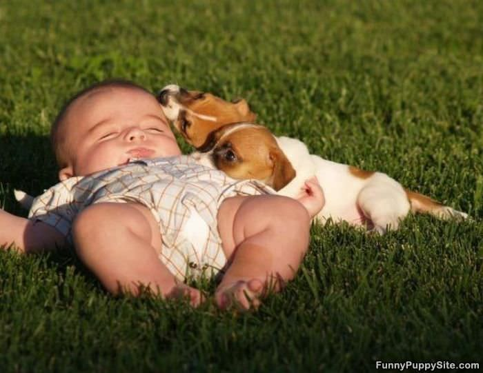 Baby and puppies funnypuppysite com puppy bowl animal planet game day