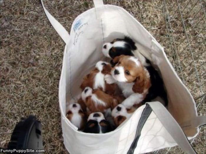 Bag Of Cute Puppies