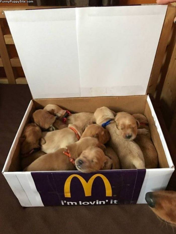 Box Of Pups
