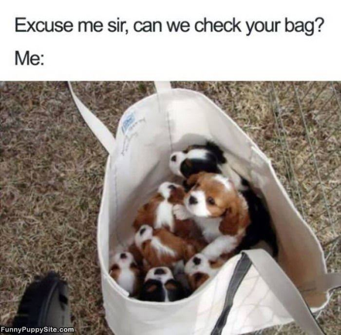 Can We Check Your Bag