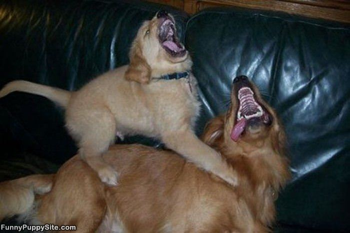 demented dogs - photo #5
