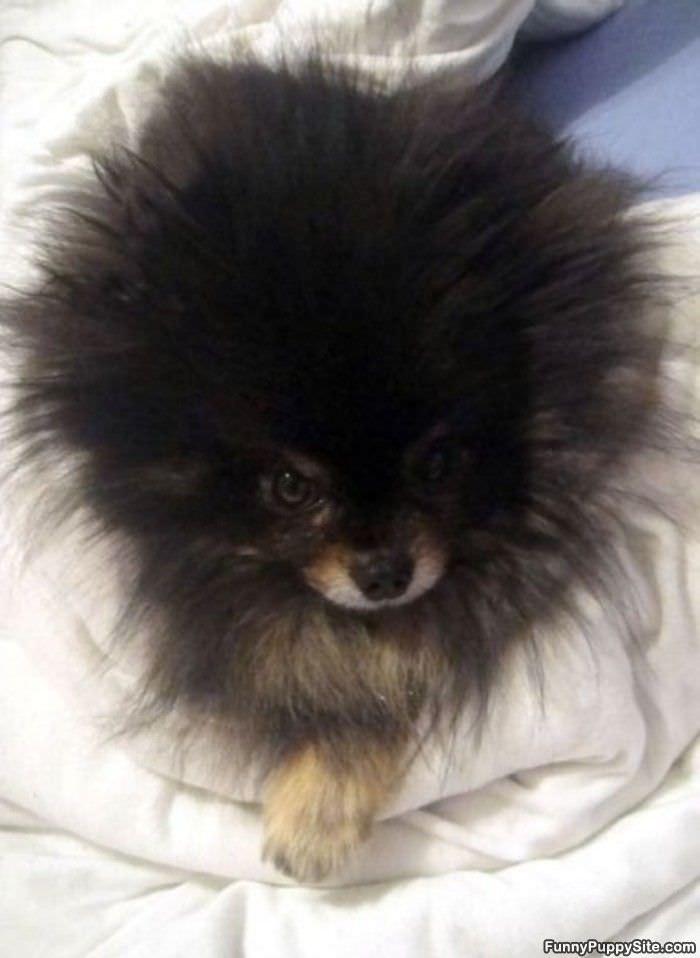 Cute Fluffy Puppy