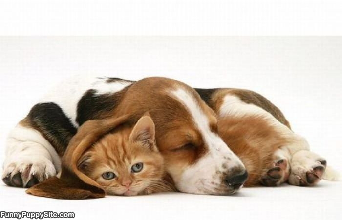 cute puppies and kittens together. hot dunno lol cute puppies