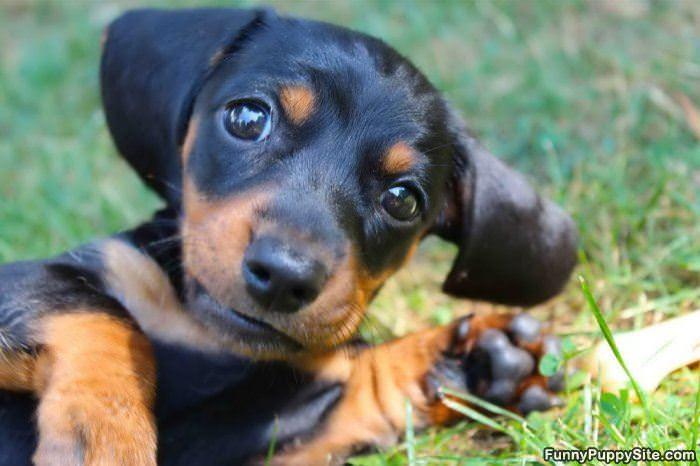 cute puppy face