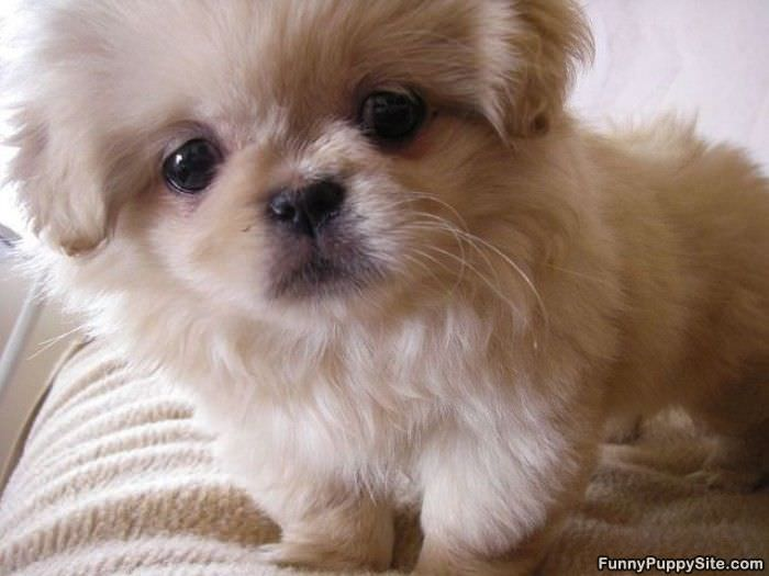 Cute Puppy Face Funnypuppysite Com