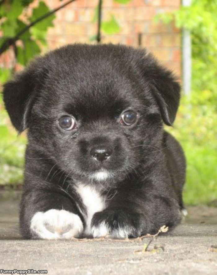 Cutest puppy eyes