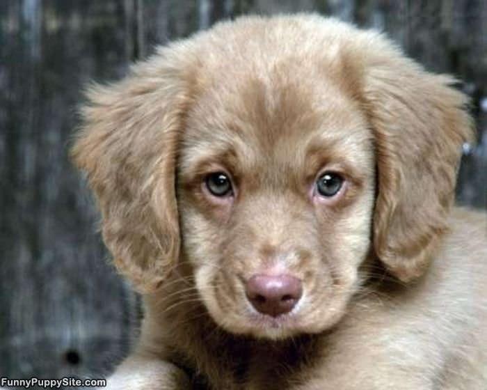 Fluffy Puppy Dog - funnypuppysite.com