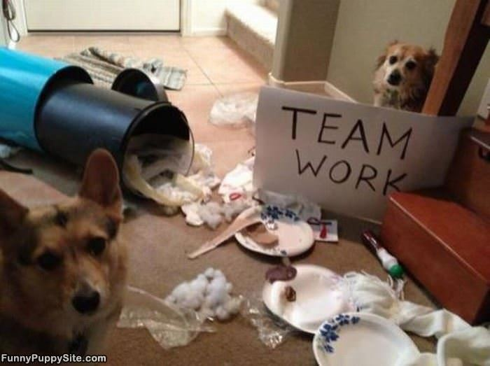 Good Team Work - funnypuppysite.com