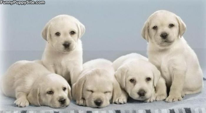 Group Of Cute Puppies Funnypuppysitecom
