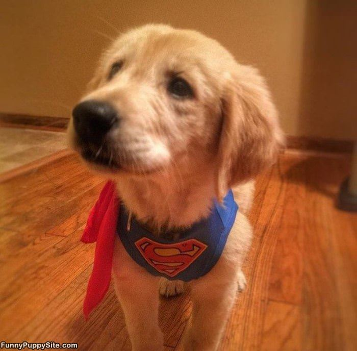 I Am Super Puppy