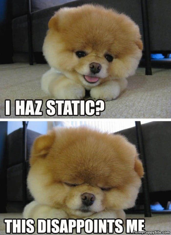 I Haz Static - funnypuppysite.com