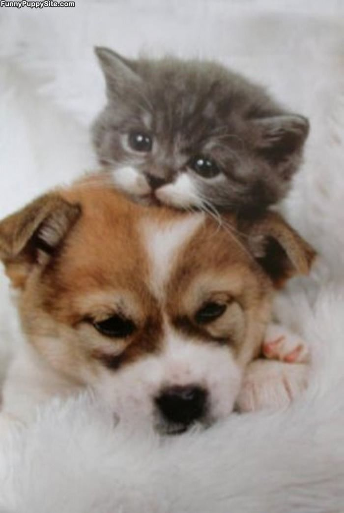 puppy and kittens pictures. Picture of Puppies Kittens