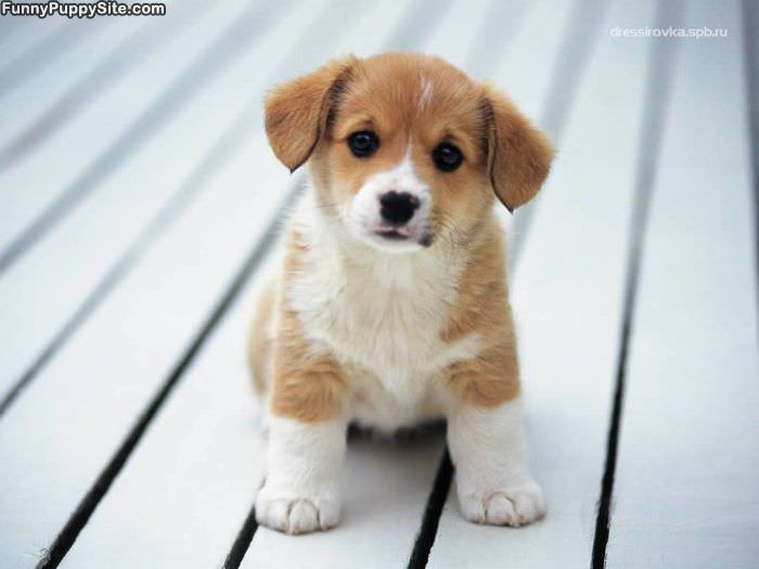 little puppy here   funnypuppysite