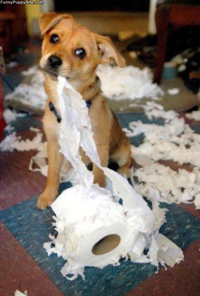 What If Cat Eats Paper
