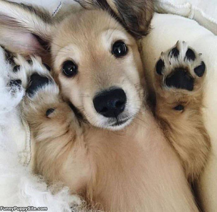 Paws Up