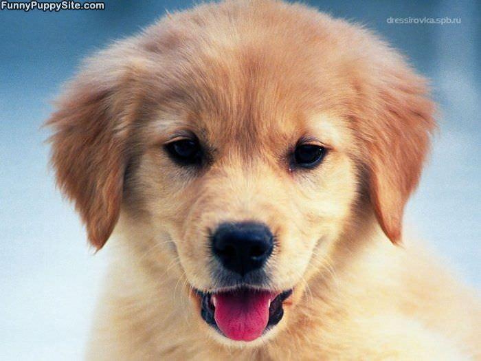 Pics Photos - Smiling Puppy