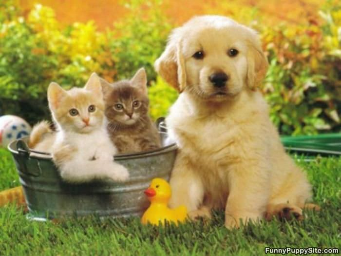 funny puppies and kittens - photo #22