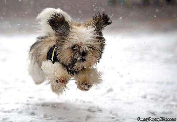 Running Free скачать торрент - фото 11