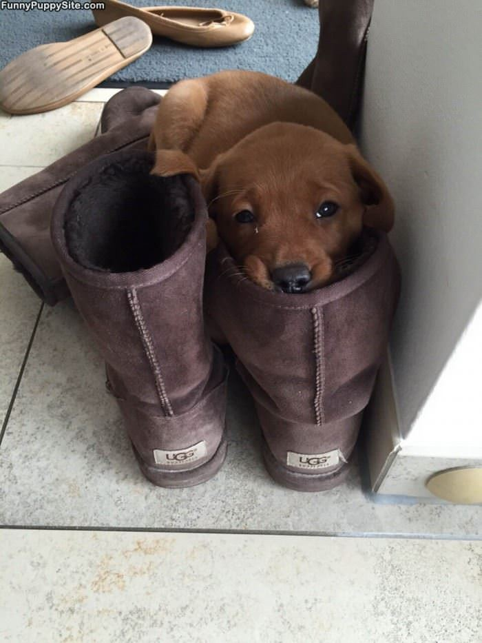 Sleeping In A Boot