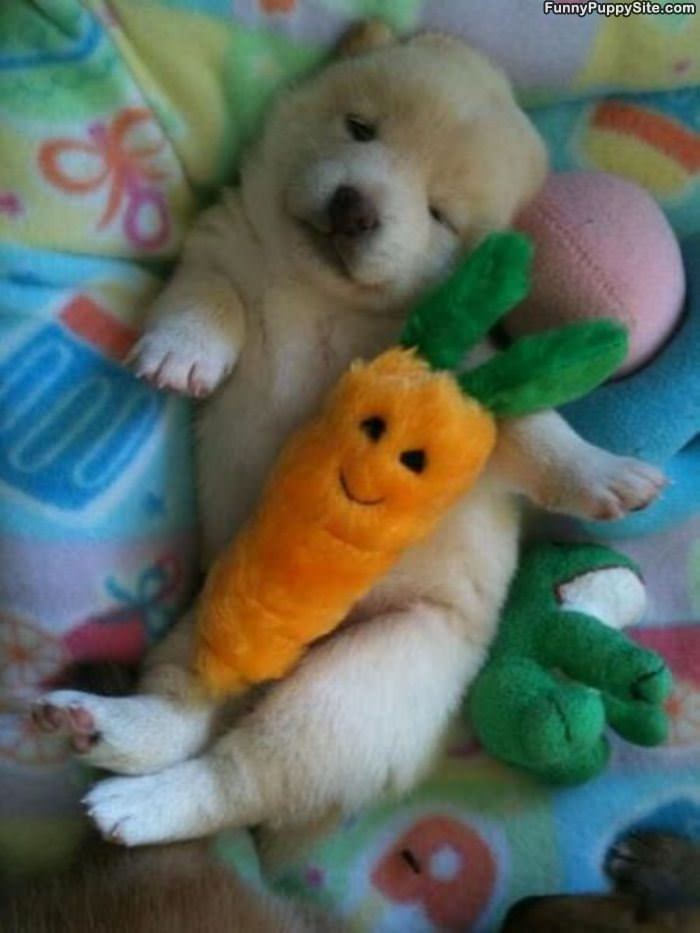 Sleeping With My Carrot