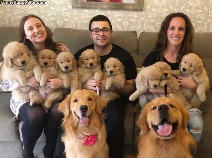 So Many Puppers