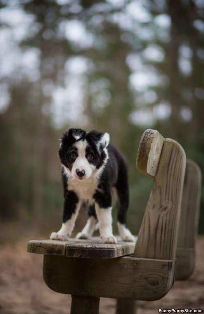 Super Cute Puppy - funnypuppysite.com
