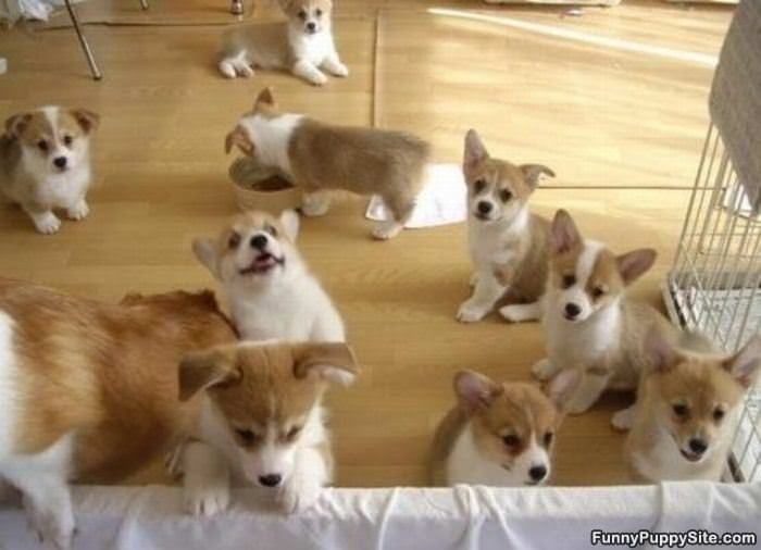 Must see Puppies Army Adorable Dog - The_Puppy_Army  Photograph_464872  .jpg