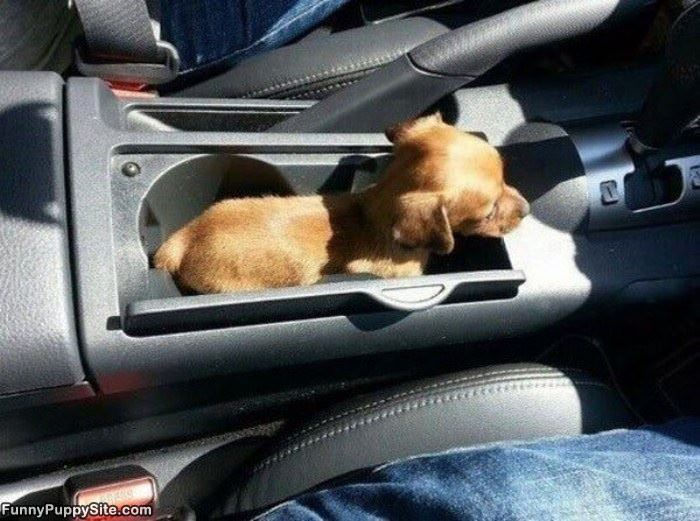 The Puppy Holder