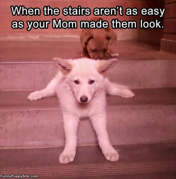 The Stairs Are Not As Easy