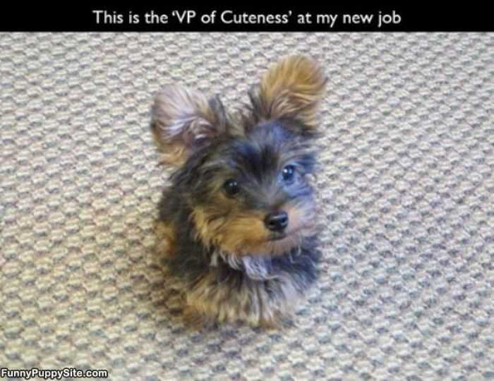 The Vp Of Cuteness