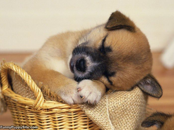 This Basket Makes Me Sleepy