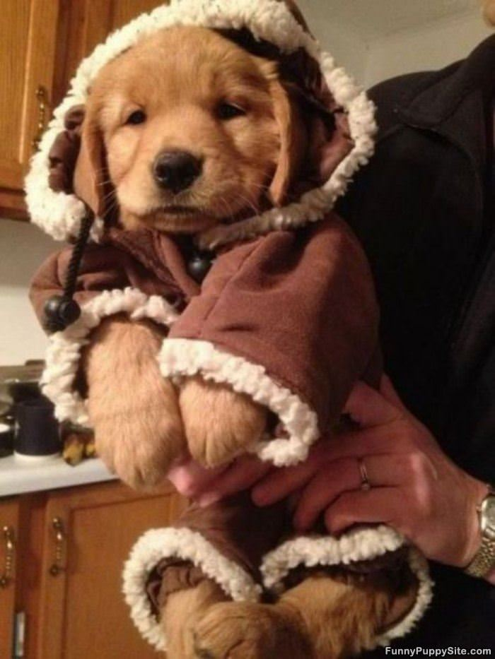 Very bundled up - Keeping outdoor dog happy winter ...