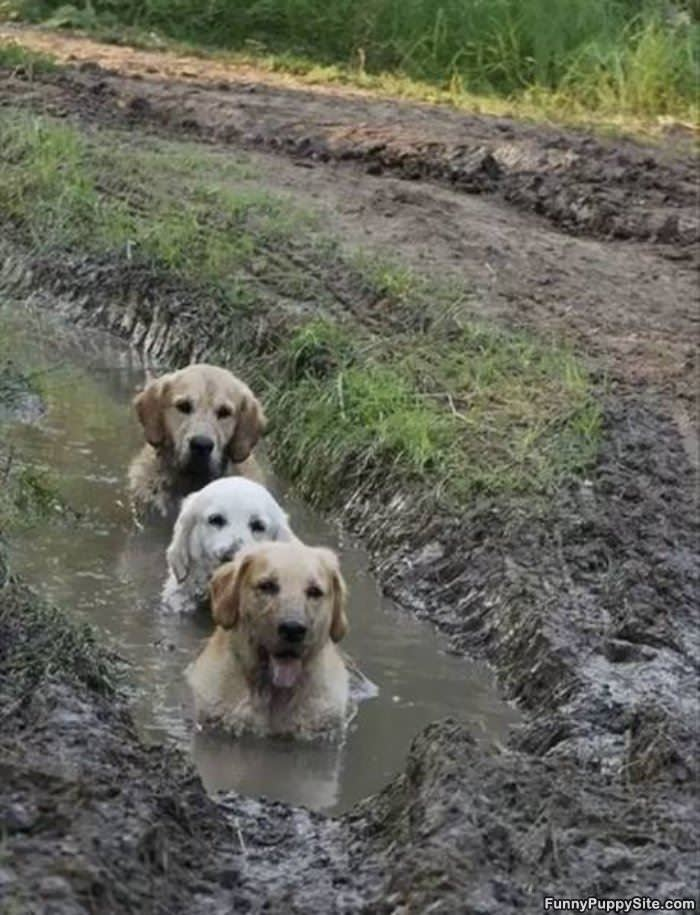 We Love The Mud