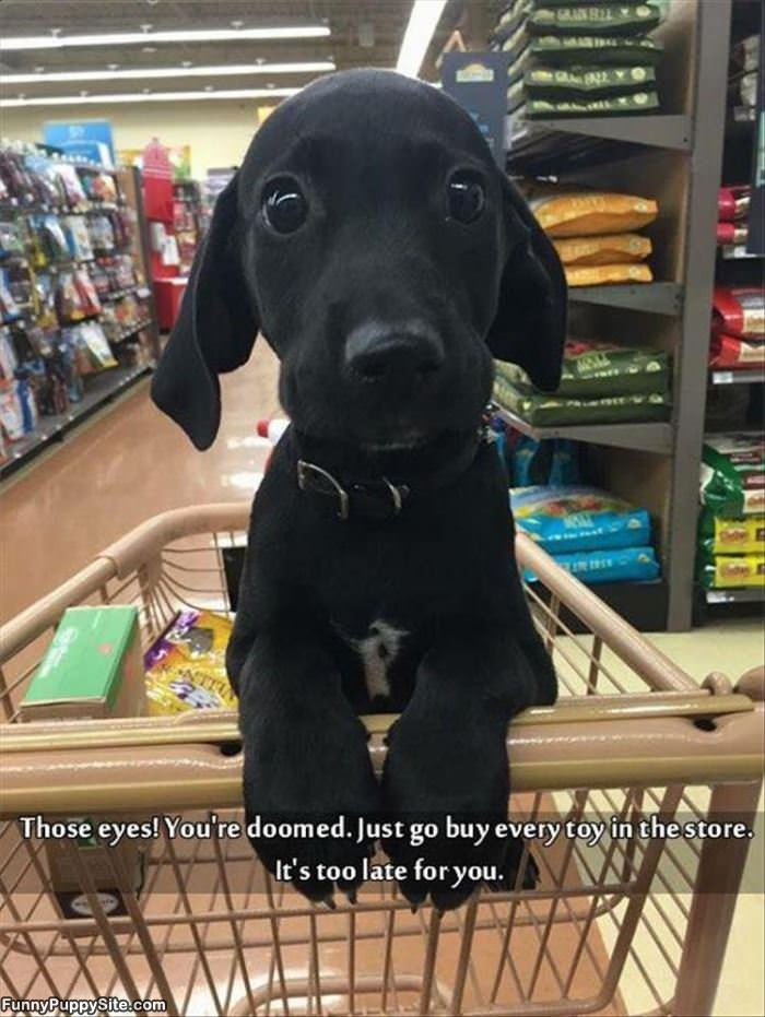You Will Buy It All - funnypuppysite.com