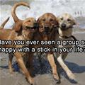 A Group With A Stick