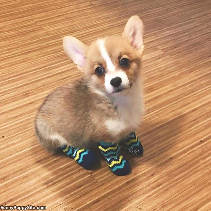 I Has Some Socks